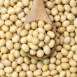 Stock Photo: Soybeans