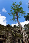 Ta Prohm Temple at Siem Reap, Combodia — Stock Photo