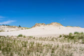 Dunes in Leba, Poland. — Stockfoto