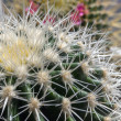 Cacti. - Stock Photo