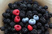 Fresh blackberries, raspberries, blueberries and one wild strawb — Stock Photo