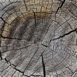 Wood cross section background. — Stock Photo #27123183