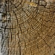 Wood cross section texture. — Stock Photo #27307509