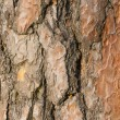 Pine tree bark texture. — Stock Photo #37290517