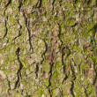 Bark of old fir tree. — Stock Photo