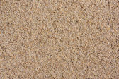 Sand texture. Sand on Baltic beach. — Stock Photo