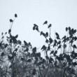 Crows on a tree - Stock Photo