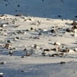 Stock Photo: Snowy plateau