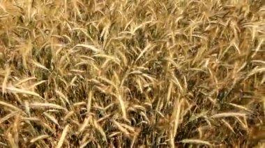 сельское хозяйство — Стоковое видео