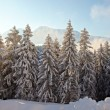 Winter Landscape — Stock Photo #36519559