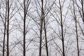 Tree branches — Foto de Stock