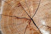 Tree trunk — Foto Stock