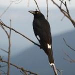 Bird on tree — Stock Photo #45288023