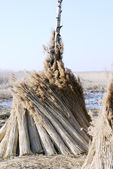 Bundles of Roof Thatching Grass. — Stock Photo