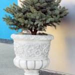 Decorative vase — Stock Photo