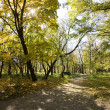 Park landscape. Autumn. — Stock Photo #13929925