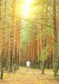 Man in a green pine forest — Stock fotografie