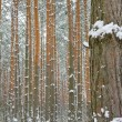 Stock Photo: Season is winter and winter forest