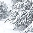 Stock Photo: Pine branch tree under snow