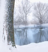 River and tree covered with snow — Stock Photo