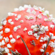 Fly-agaric in the forest — Stock Photo