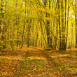 Stock Photo: Sunbeams pour into autumn forest