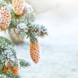 Spruce branches with cones — Stock Photo #17355423