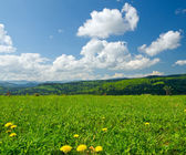 Yellow dandelions on meadow in mountains in spring — Stock Photo
