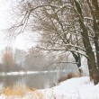 Winter river and trees in winter season — Stock Photo