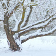 Stock Photo: Tree under snow in winter time