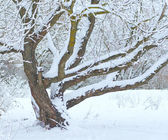 Tree under snow in winter time — Stock Photo