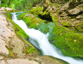 Mountain river deep in forest — Stock Photo