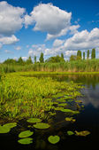 Green vegetation on the river — Stock Photo