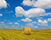 Fasci di paglia sul campo dopo il raccolto — Foto Stock