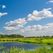 River in summer time. Nature landscape — Stock Photo
