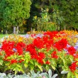 Stock Photo: Different colors of flowers in the park