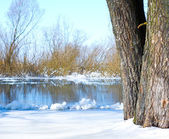 River and tree covered with snow — Stockfoto
