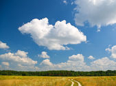 Road near forest in summer season — Stock Photo