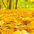 A fallen leaves in autumn forest — Stockfoto