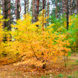 Stock Photo: Yellow tree in forest, nature autumn season