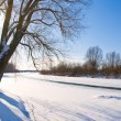 Stock Photo: Frozen river and tree covered with snow
