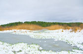 Green blade of grass through the snow on river — Stock Photo