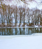 Frozen river and trees in winter season — Stock Photo