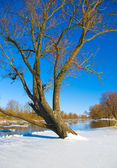 River and trees in winter season — Stock Photo