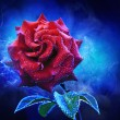 Royalty-Free Stock Photo: Mystical red rose