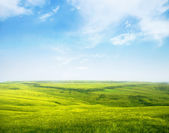 Serene hilly meadow — Stock Photo