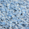 Macro snow crystal textures, background — Stock Photo
