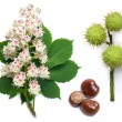 Horse-chestnut flowers, leaf and seeds — Stock Photo #16972527