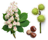 Horse-chestnut flowers, leaf and seeds — Stock Photo