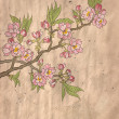 Stock Photo: Japanese flowering cherry